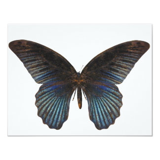 BlueSwallowTail Butterfly 11 Cm X 14 Cm Invitation Card