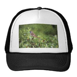Bluethroat male trucker hats