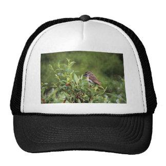 Bluethroat Male Trucker Hat