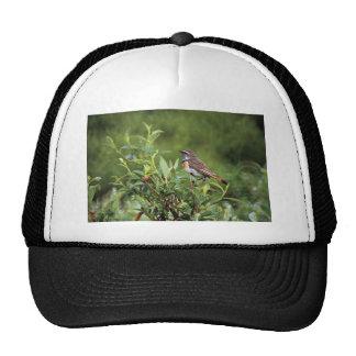 Bluethroat Male Hats