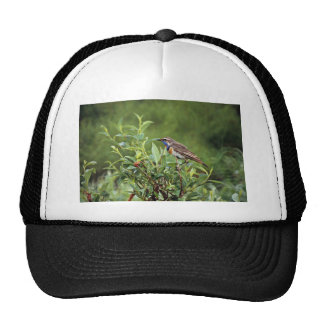 Bluethroat Male Hat