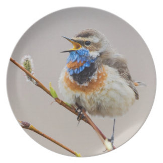 Bluethroat Singing Plates
