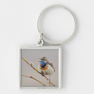 Bluethroat Singing Silver-Colored Square Key Ring