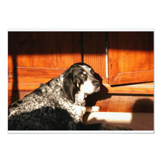 bluetick coonhound laying.png 13 cm x 18 cm invitation card