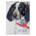 Bluetick Coonhound Photo Card