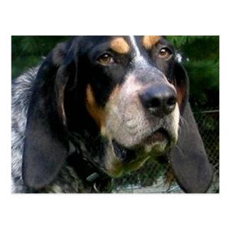 Bluetick Coonhound.png Postcard