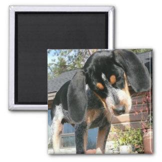 Bluetick Coonhound Puppy Magnet