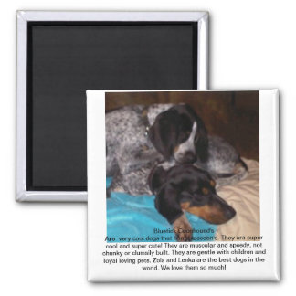 Bluetick Coonhounds Square Magnet