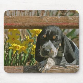 Bluetick puppy mouse mat