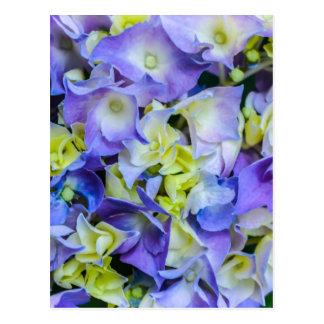 BlueYellow Flowers.jpg Postcard