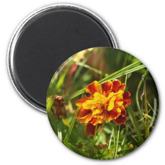 blume blumendesign 6 cm round magnet