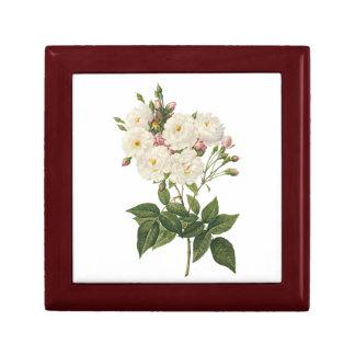 blush noisette rose(Rosa noisettiana) by Redouté Gift Box
