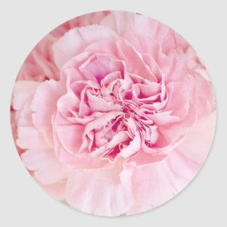 Blush Pink Carnations Classic Round Sticker