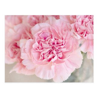 Blush Pink Carnations Postcard