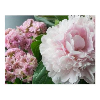Blush Pink Peonies Postcard