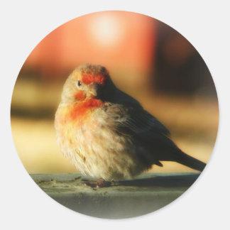 Blushing Birdie Round Sticker