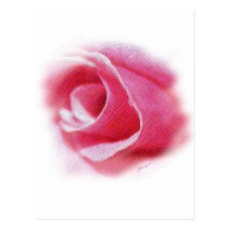 Blushing Pink Postcard