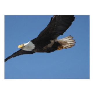 BMIS Bald Eagle on a Mission Photograph