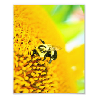 BNo4: Bee-licious Number 4 Art Photo