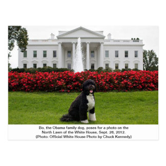 Bo- The Obama Family dog Postcard