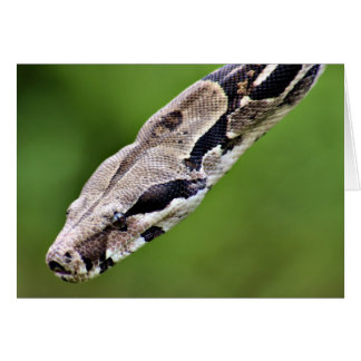 Boa Constrictor Greeting Cards