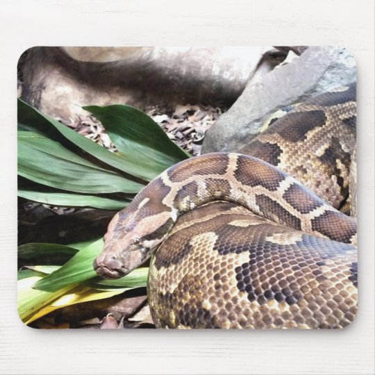 Boa constrictor mouse mat