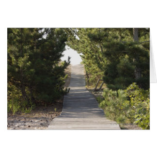 Boardwalk footpath through evergreen card