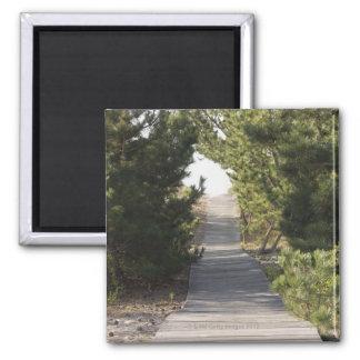 Boardwalk footpath through evergreen magnet