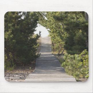 Boardwalk footpath through evergreen mouse mat