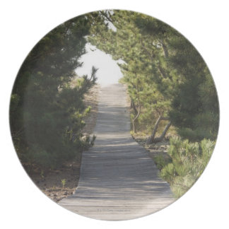 Boardwalk footpath through evergreen plate