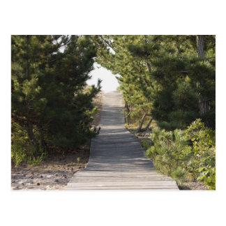 Boardwalk footpath through evergreen postcard