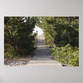 Boardwalk footpath through evergreen poster