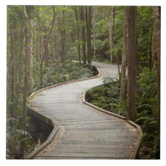 Boardwalk to Nelson Falls, Franklin - Gordon Large Square Tile