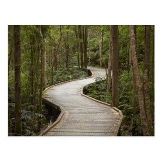 Boardwalk to Nelson Falls, Franklin - Gordon Postcard