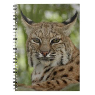 Bobcat 2 notebook