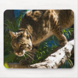 Bobcat Crouch Mouse Mats