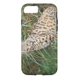 Bobcat (Felis rufus) iPhone 8/7 Case