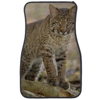 Bobcat, Felis rufus, Wakodahatchee Wetlands, Car Mat