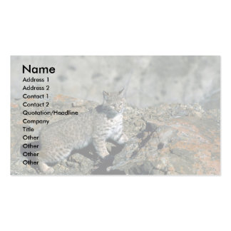 Bobcat in rocky canyon business cards