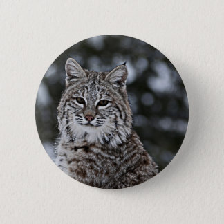 Bobcat in the Snow 6 Cm Round Badge