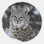 Bobcat in the Snow Round Sticker