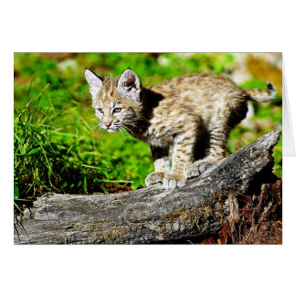 Bobcat Kitten Card