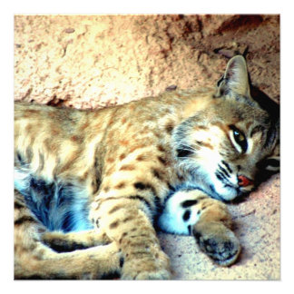 Bobcat Photo Invitation