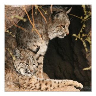 Bobcat Photos Invitation