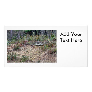 Bobcat Picture Photo Card Template