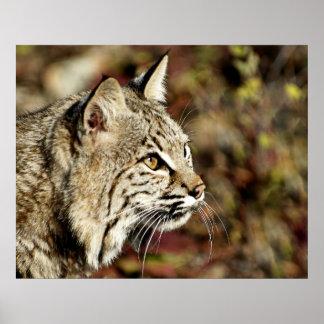 Bobcat Profile Poster