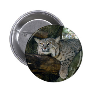 BobcatBCR049 6 Cm Round Badge