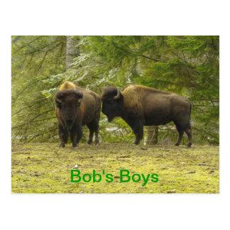 Bob's Boys - Buffalo Morning Star Bison Ranch Postcard