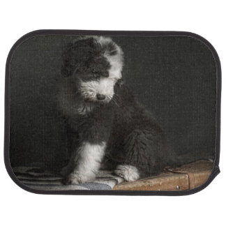 Bobtail puppy portrait in studio car mat