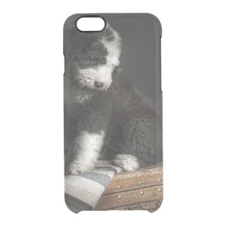 Bobtail puppy portrait in studio clear iPhone 6/6S case